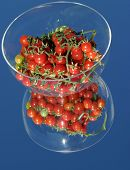 Fresh picked cherry tomatos from my garden on a mirror with a blue sky in a glass bowl