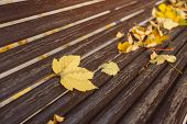 Bench Detail With Yellow Leaves. Autumn In City Park In Yellow Leaves. Yellow Maple Leaves On Garden poster