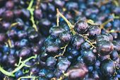 Grape Background. Dark Grape. Blue Grape. Wine Grape. poster