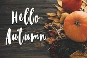 Hello Autumn Text. Hello Fall Sign On Pumpkin, Autumn Vegetables With Colorful Leaves,acorns,nuts, B poster
