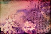 pic of cherry-blossom  - Grunge background of Far Eastern looks  - JPG