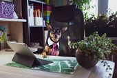 Dog Office Worker. A Dog In A Tie And A White Collar In The Office. Russian Toy Terrier. Director, M poster