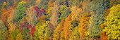 Beautiful Orange, Red And Green Autumn Forest, Many Trees On The Orange Hills Panorama. Autumn Backg poster