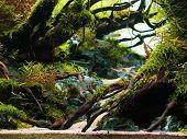 Still Life Close Up Of Beautiful Tropical Aqua Scape, Nature Aquarium Green Plant An Tropical Colorf poster