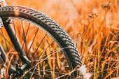 Bicycle Wheel In Dry Autumn Yellow Meadow Grass. Close Up Wheel Detail. Sunset Sunrise Time. Sunligh poster