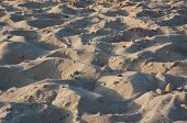 Seashore Beach With Sand, Footprints In The Sand, Sand And Seashells Summer poster