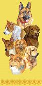 Vertical Postcard With Dogs Of Different Breeds (german Shepherd; Golden Retriever, Small Pomeranian poster