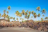 Постер, плакат: Панорамный вид на красивый тропический пляж с дерева пальмы против голубого неба в маленькой Вагатор Гоа