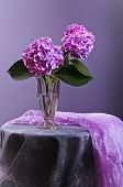 Hortensia Flowers In Glass Vase