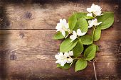 picture of jasmine  - Jasmine flowers and leaves on brown wooden board - JPG