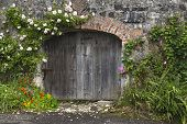 stock photo of climbing roses  - Charming pink and white rose covered grey stone and brick wall and stable doors in Northern Irish village - JPG