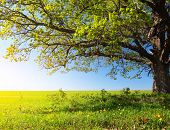 stock photo of greenery  - Spring tree with fresh green leaves on a blooming meadow - JPG