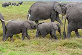 Elepahnt Family in Amboseli NP