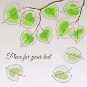 foto of linden-tree  - Abstract transparent linden leaf green style with place for your text - JPG