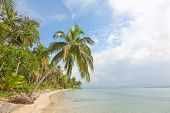 picture of deserted island  - Deserted Starfish beach on the archipelago Bocas del Toro - JPG