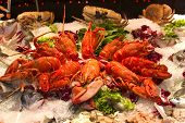 picture of norway lobster  - Lobsters crabs and fish mixture crustaceans exhibited - JPG