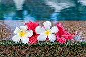 stock photo of plumeria flower  - Still Life of Hibiscus and Plumeria Flowers at Edge of Pool in Peaceful Setting - JPG