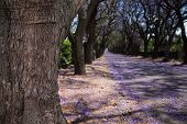 stock photo of tree lined street  - Close - JPG
