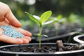 stock photo of pot plant  - a hand giving fertilizer to a young plant in a plastic pot  - JPG