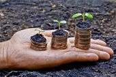 stock photo of sustainable development  - hands holding tress growing on coins / csr / sustainable development / economic growth 