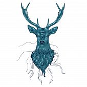 stock photo of black tail deer  - Head of a male deer in hand drawn style illustration - JPG