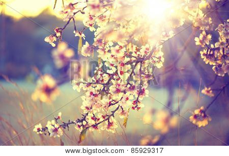 Spring bloom foundation. Lovely nature scene with blossoming tree and sun flare. Sunny day. Sprin