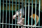 foto of species  - malayun sun bear is dangerous species in forest thailand and it have black hair u - JPG
