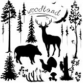 foto of animal silhouette  - Set of silhouettes of woodland plants and animals - JPG