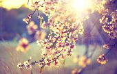 stock photo of planting trees  - Spring blossom background - JPG