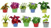 stock photo of plant pot  - Different kinds of potted plants for gardening - JPG