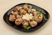 image of escargot  - Escargot with rosemary thyme garlik and melissa - JPG