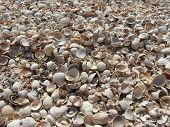 pic of azov  - fogografiya shells made on the coast of the sea of azov - JPG