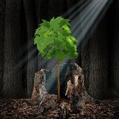 picture of addict  - Life renewal and recovery concept as a green leaf tree shaped as a human head growing out of an old dead stump as survival symbol for rebirth and creating a new you after an addiction or crisis - JPG