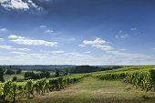 stock photo of bordeaux  - Vineyards and countryside near Bordeaux in Spring - JPG