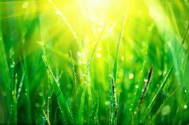 picture of grass  - Grass - JPG