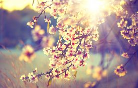 pic of yellow  - Spring blossom background - JPG
