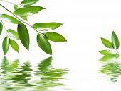 foto of green leaves  - fresh green leaf - JPG
