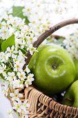 Постер, плакат: Зеленое яблоко с цветами в корзине на белом фоне