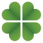 pic of four leaf clover  - vector four leaf clover - JPG