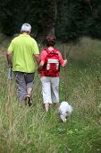 Senior couple rambling in country path with dog