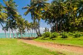 Road At Ile Royale, One Of The Islands Of Iles Du Salut Islands Of Salvation In French Guiana poster