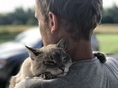 Blue-eyed Cat Is Grateful Embraces The Owner After Separation, He Has Strongly Missed poster