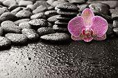 Постер, плакат: базальтовые камни с орхидеей после дождя