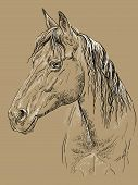 Horse Portrait. Horse Head With Long Mane In Profile In Black And White Colors Isolated On Beige Bac poster