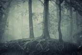 stock photo of cold-weather  - scary trees with roots in a dark forest - JPG