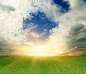 Green Summer Field And Sunny Sky Landscape poster