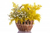 picture of ragweed  - Summer bouquet of wild flowers on a white background - JPG