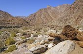 picture of anza  - Palm Canyon in Anza - JPG
