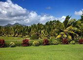 stock photo of mauritius  - Nature of Mauritius - JPG