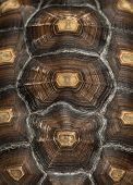pic of carapace  - Close - JPG